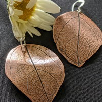 Copper leaf earrings hung on sterling silver ear hooks