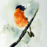 Bullfinch, Original Watercolour Painting.