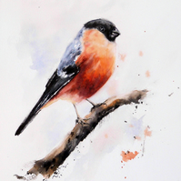 A Bullfinch, Original Watercolour Painting.