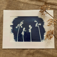 English Bluebells Cyanotype Mount