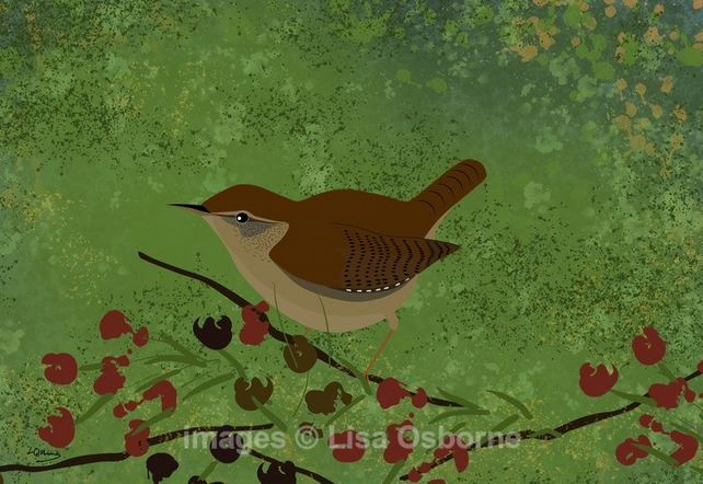Wren - print from my digital illustration. Garden birds.