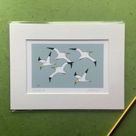 Gannets - print from digital illustration with mount of seabirds