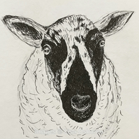 Speckled Face Sheep - pen and ink drawing. Farm animals.