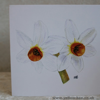 Narcissi Greetings card printed from an original watercolour  Narcissi Daffodils
