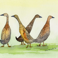Print or Card of Indian Running Ducks from Original Watercolour