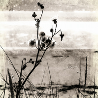 "Botanical beach abstract, fine art photography, Giclee print. 8""x 6.5"" mounted"