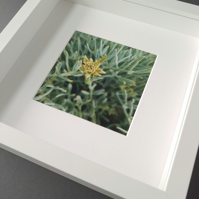 Rock Samphire - Up Close Coast Framed Photograph
