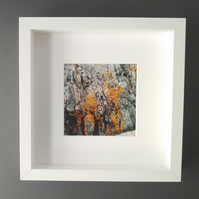Lichen and Wood - Up Close Coast Framed Photograph