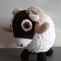 Sammy the Swaledale Sheep