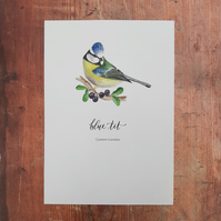 Blue Tit Watercolour Print