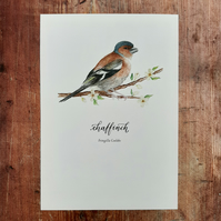 Chaffinch Watercolour Art Print