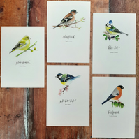 Selection of 3 Watercolour Bird Prints