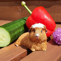 Crested Guinea Pig