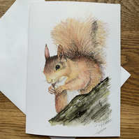 Free UK post  - A5 blank card of Sennen Squirrel -