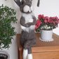 Henry Hare, needle felted wool sculpture ooak,collectable