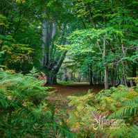 Greeting Card -  Early Autumn in Epping Forest