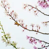 Greeting Card - Blossom Collection