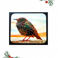 Baby Starling Coaster; High Gloss Finish; Wonderful Colours