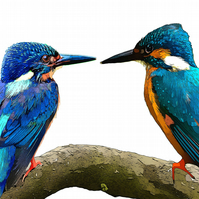 Two Kingfishers sitting on a Branch, Greeting, Birthday Card