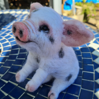 Needle felted Handmade sweet pig sculpture by Countryjewells