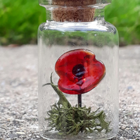 Poppy In A Bottle