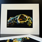 Mounted Giclee Print - Rabbit Skull - Scotland