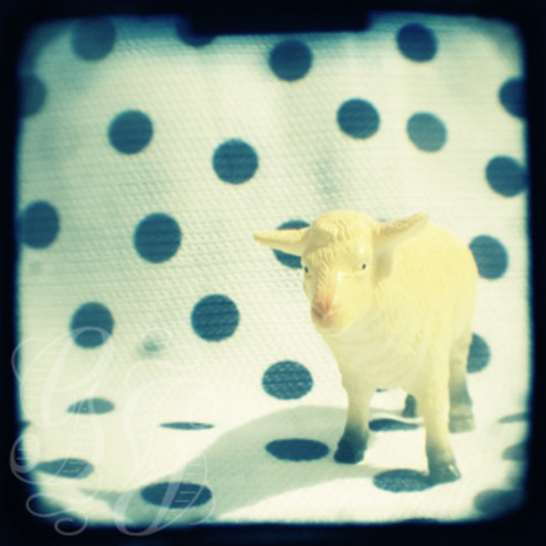 Look at ewe: 5 x 5 inch photographic print