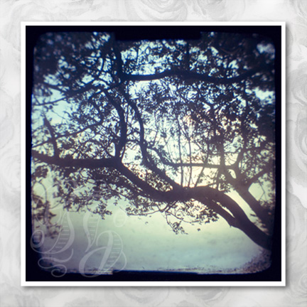 Sunset trees: 5x5 inch square ttv photographic print