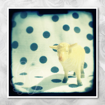 Look at ewe: 5 x 5 inch signed photograph of a white toy sheep