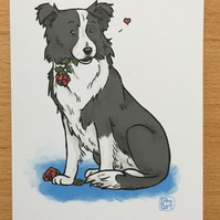 Border Collie Rose Card