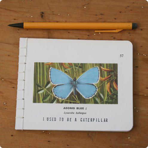 Adonis Blue Butterfly Notebook