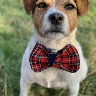Tartan dog bow tie - Red tartan dog bow tie cute ouffit