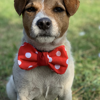 Polka dots dog bow tie - Red dog bow tie