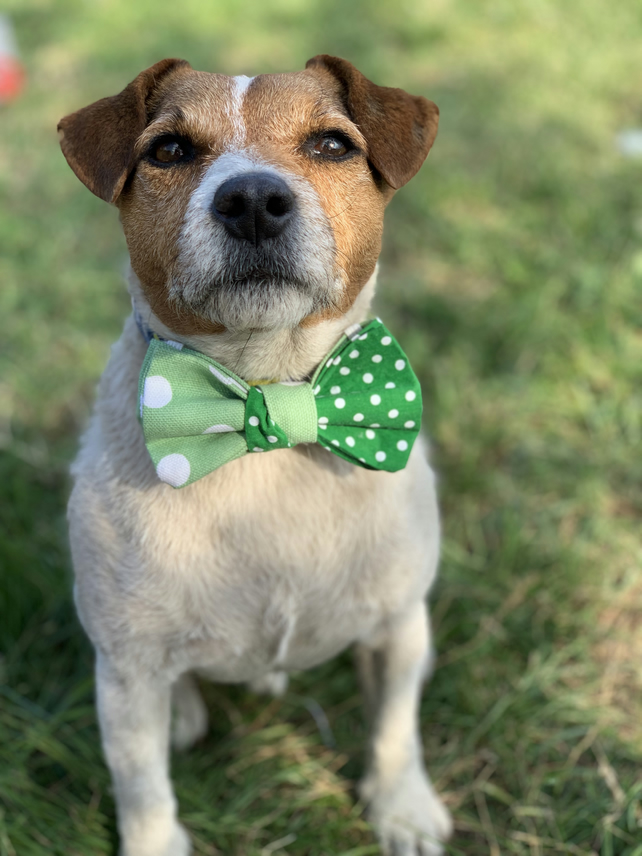 Green polka dots dog bow tie