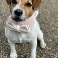 Dog wedding attire - Cute dog bandana with a bow tie