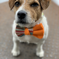 Orange dog bow tie with stripes - Cute dog party outfit