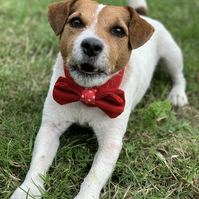 Red dog bandana with a bow tie