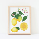 A4 Lemon Botanical Watercolour Art Print