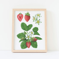 A4 Strawberry Botanical Watercolour Art Print