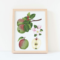 A4 Apple Botanical Watercolour Art Print
