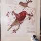Little Red Wren atop Vintage Print of Wren, Sparrow & Red Berries with Poem