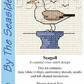 Mouseloft Stitchlets 'By The Seaside - Seagull' Cross Stitch Kit