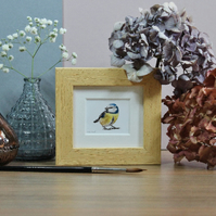 Framed Blue Tit - Mini Bird art print from watercolour painting