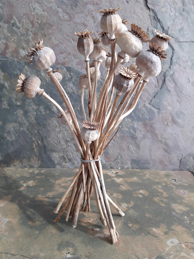 Poppy seed heads - dried. Flower arranging craft supply