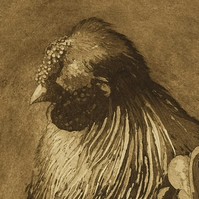 'Mr Silkie' - Limited Edition Etching, Silkie Fowl, Fine Art Print, Wall Art,