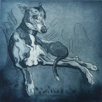 Buddy - etching of a whippet, limited edition print, fine art print, lurcher