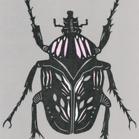 Grey and Pink Beetle