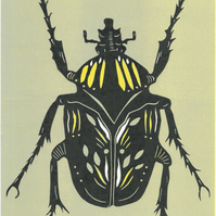 grey green and yellow beetle