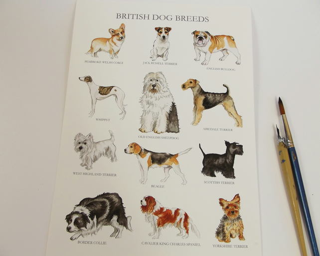 British Dog Breeds A4 Giclée Print Wall Art - unframed