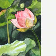 Water lily. Original watercolour.